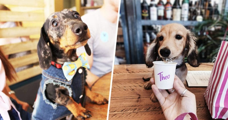 A dachshund cafe is coming to Manchester next month, The Manc