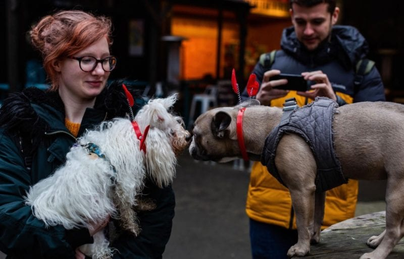 Hatch is putting on a doggy Valentine's Day event for single dog owners and couples, The Manc