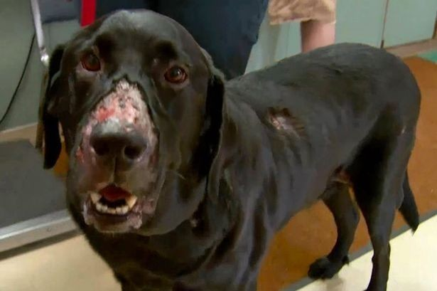 New cases of deadly dog disease Alabama Rot found in UK, The Manc