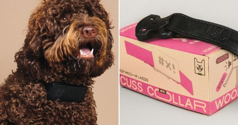 This dog collar will say a swear word when your dog barks, The Manc