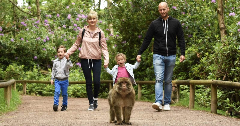 A forest where you can meet monkeys is reopening its doors next month, The Manc