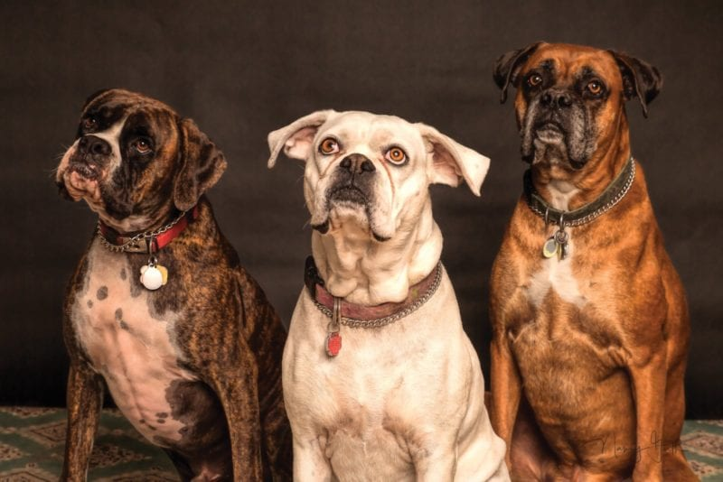 Cheshire Dogs' Home massively reduces neutering costs for February, The Manc