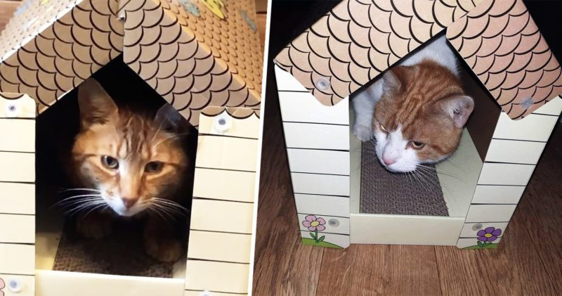 You can now buy your cat a pop up 'scratchy house' for £4, The Manc