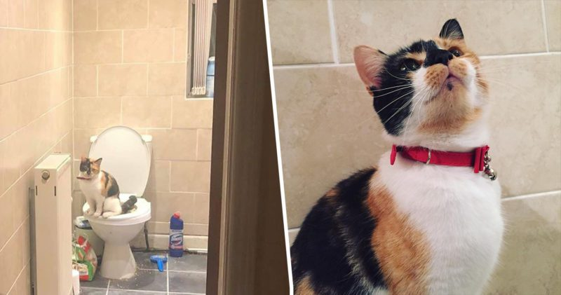 This pandemic trained cat uses the human loo and it's brilliant, The Manc