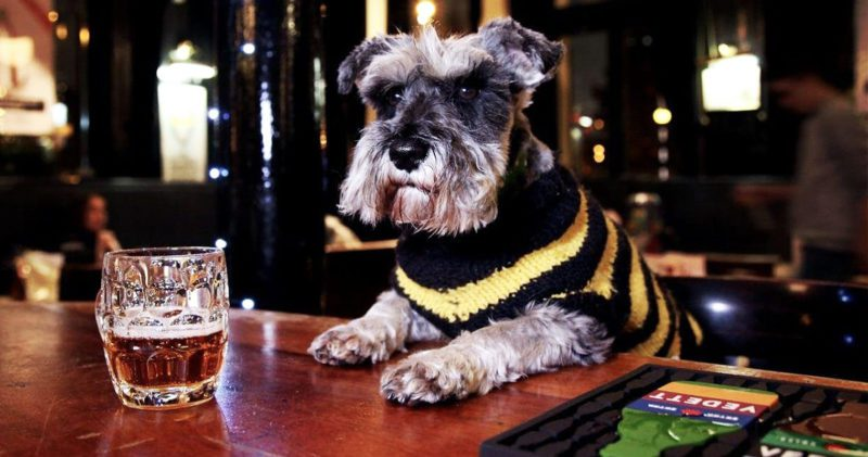 The best dog-friendly bars and restaurants in Manchester, The Manc