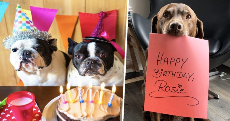 Quarantined 5-year-old just wants people to send her photos of their dogs for her birthday, The Manc