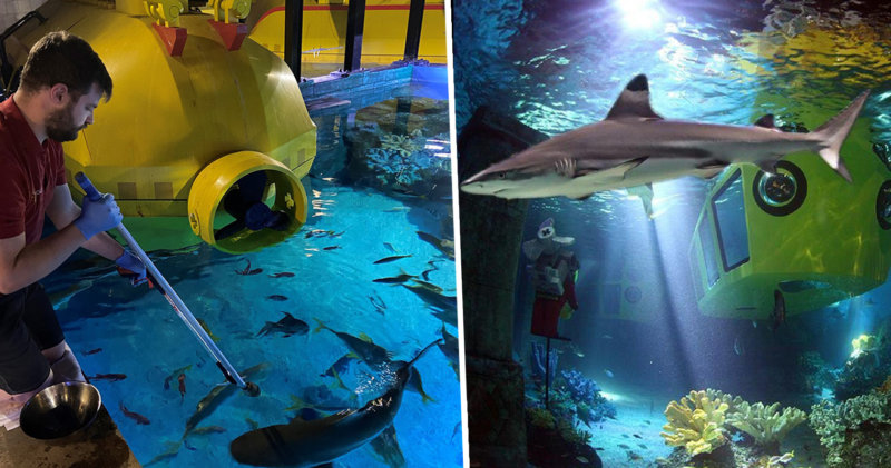 LEGOLAND is live streaming their resident sharks today, The Manc