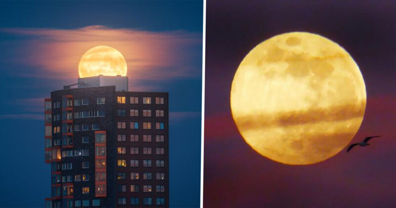 Tonight's 'Flower Moon' will be the last super moon of 2020, The Manc
