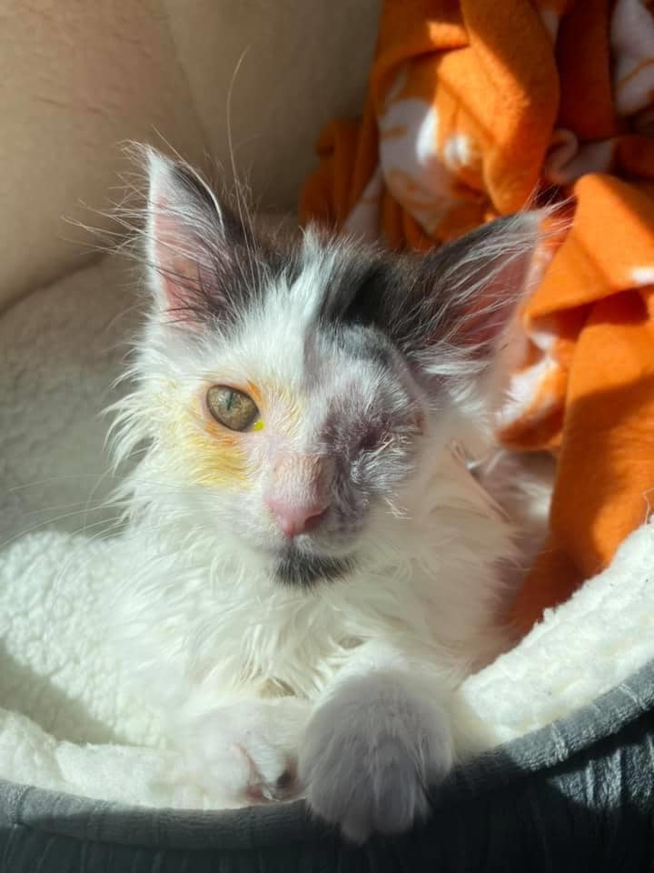 This one-eyed rescue kitten in Bury needs to find a forever home, The Manc