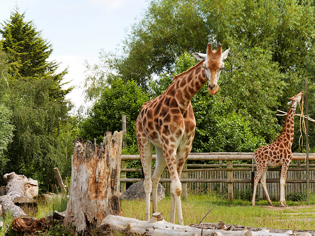 Chester Zoo explains how the zoo will operate when it reopens this month, The Manc