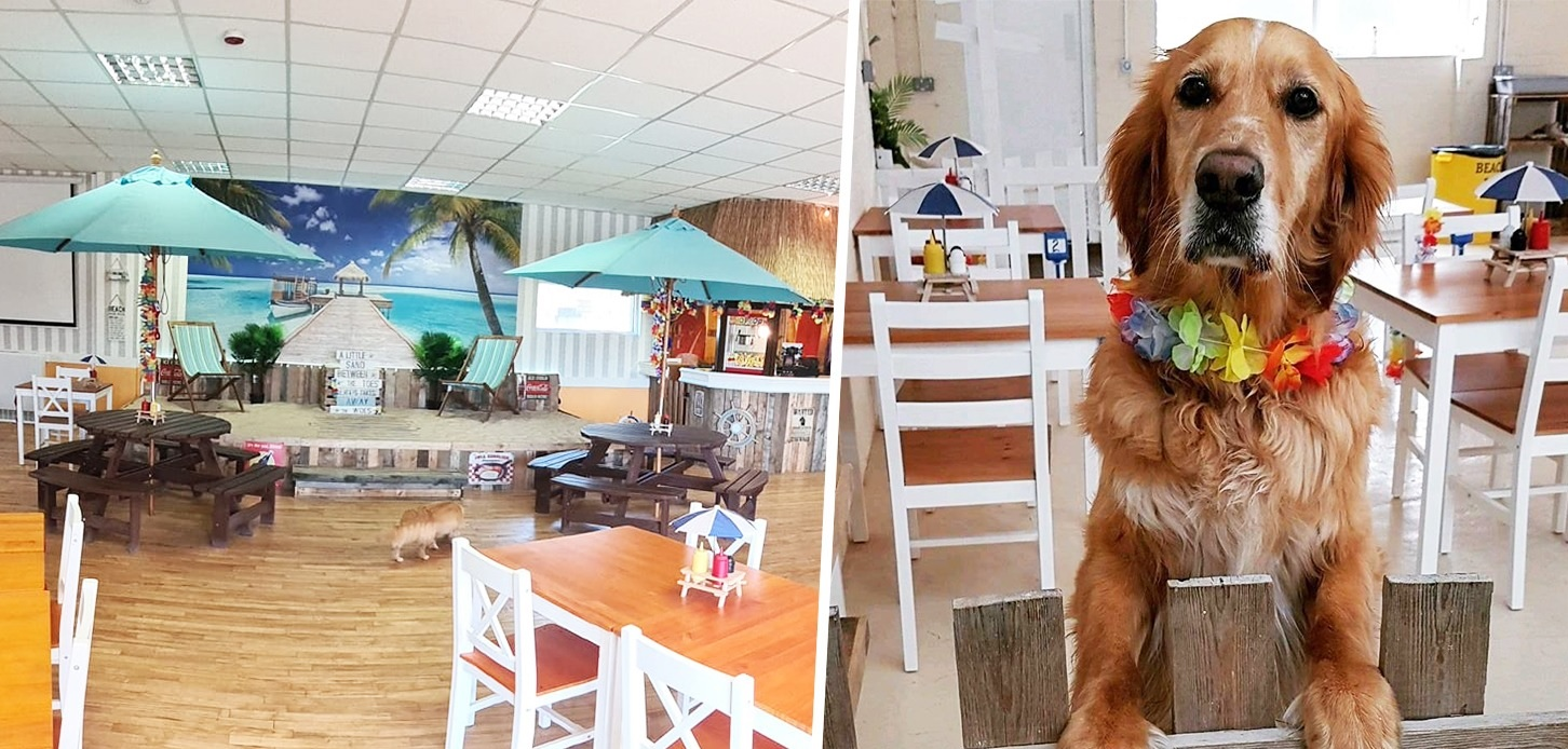 There's a new dog cafe with a beach opening in Greater Manchester, The Manc