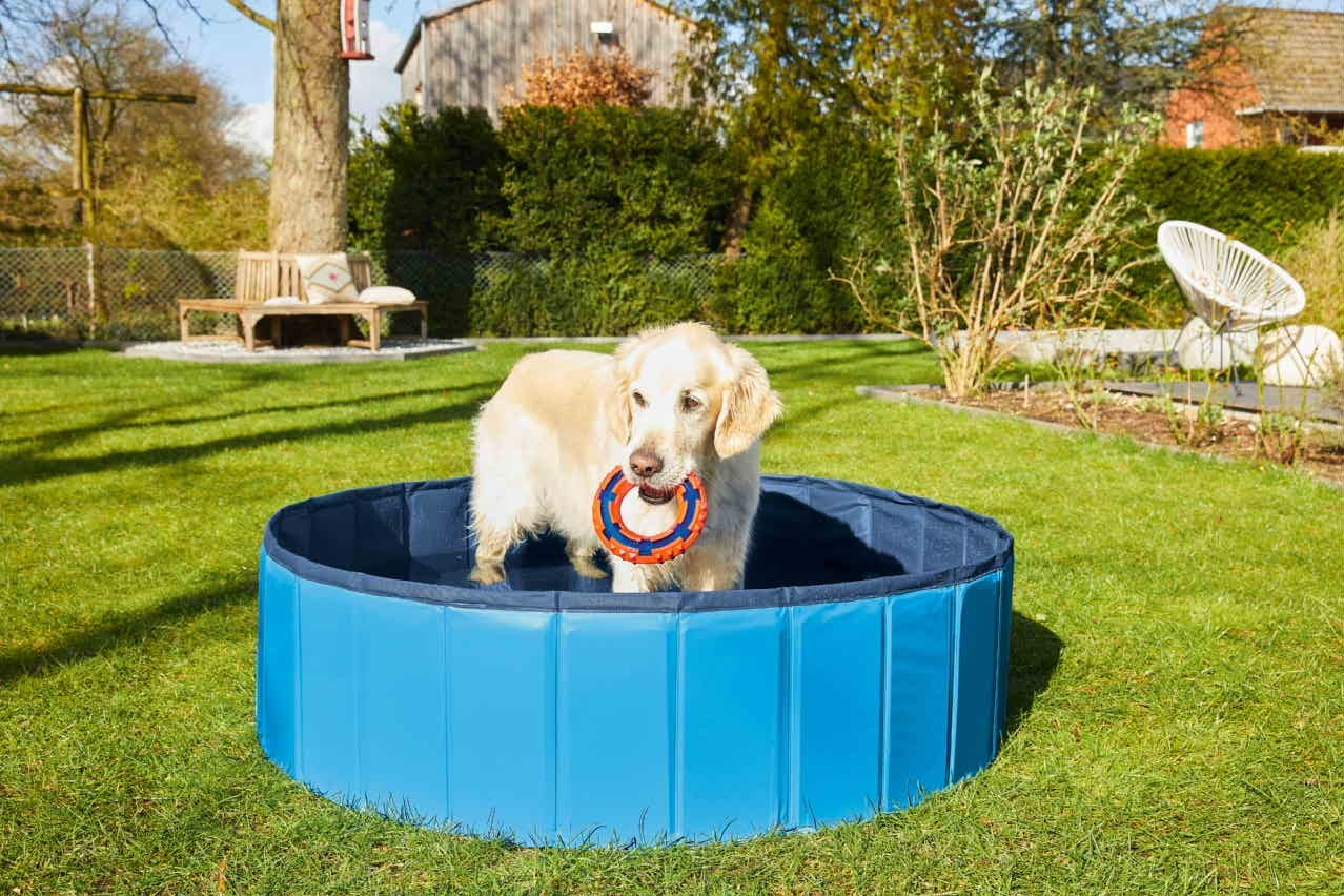 Lidl launches range of sunbeds and swimming pools for pets, The Manc