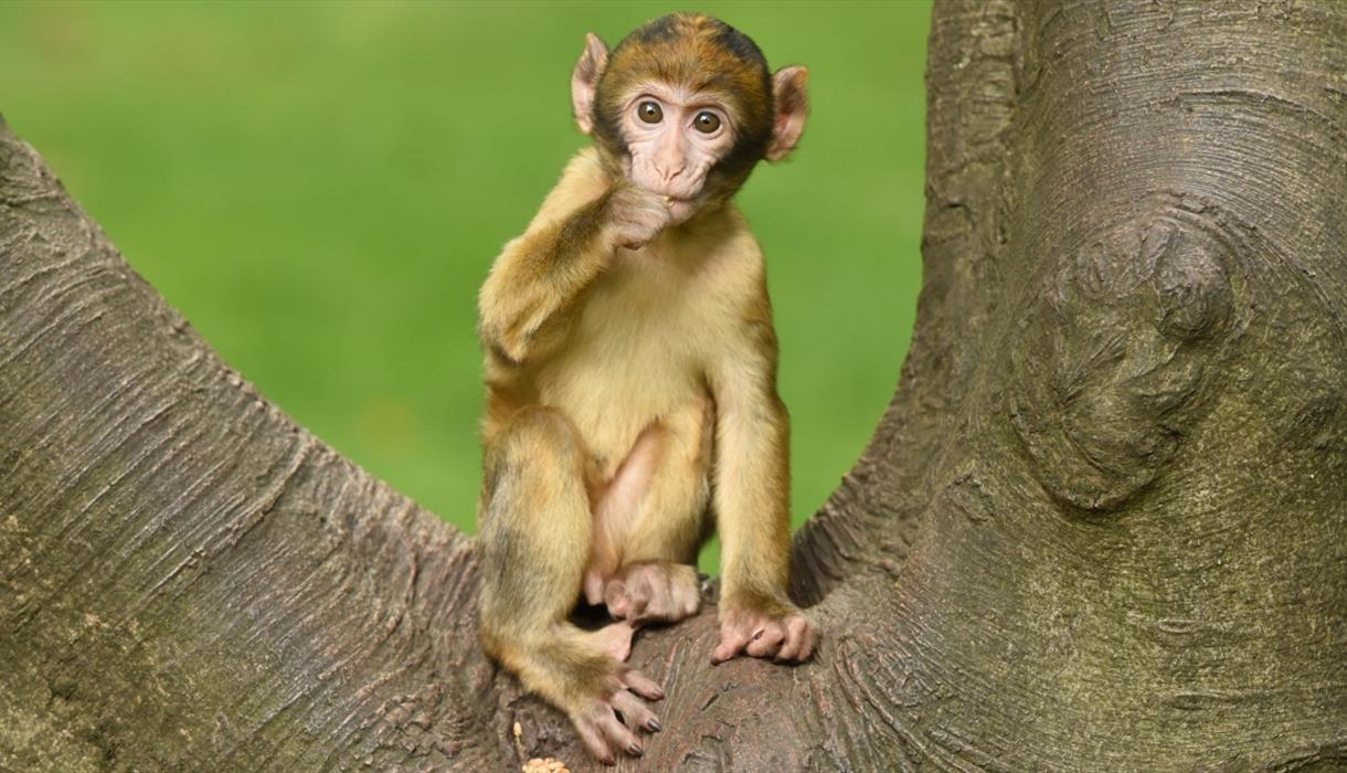 Trentham Monkey Forest is latest attraction to confirm reopening date, The Manc