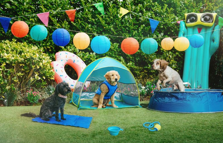 Pets At Home release 'pet cooling range' perfect for heatwaves, The Manc