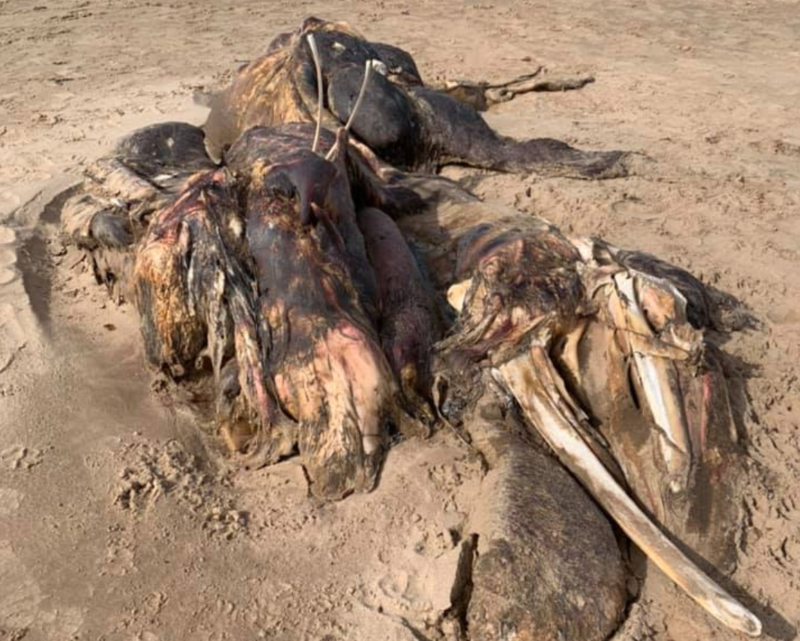 A bizarre creature has washed up on a beach in Southport and people haven't a clue what it is, The Manc