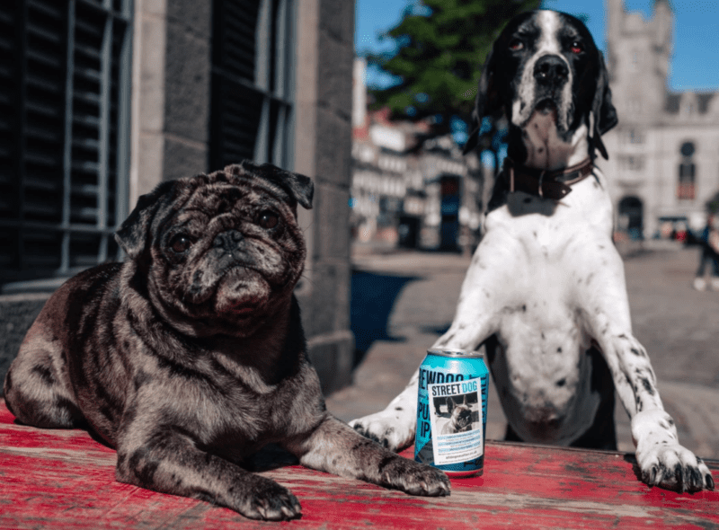 BrewDog launches 'Street Dog IPA' to help find families for homeless dogs, The Manc