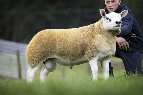 The 'world's most expensive sheep' from Stockport has just sold for £368,000 at auction, The Manc
