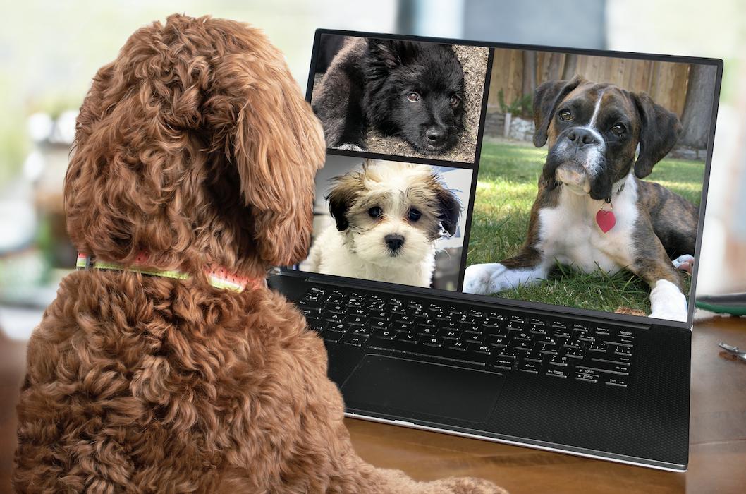 Lockdown inspires new era of dog names – including 'Zoom', 'Boris' and 'Big Mac', The Manc