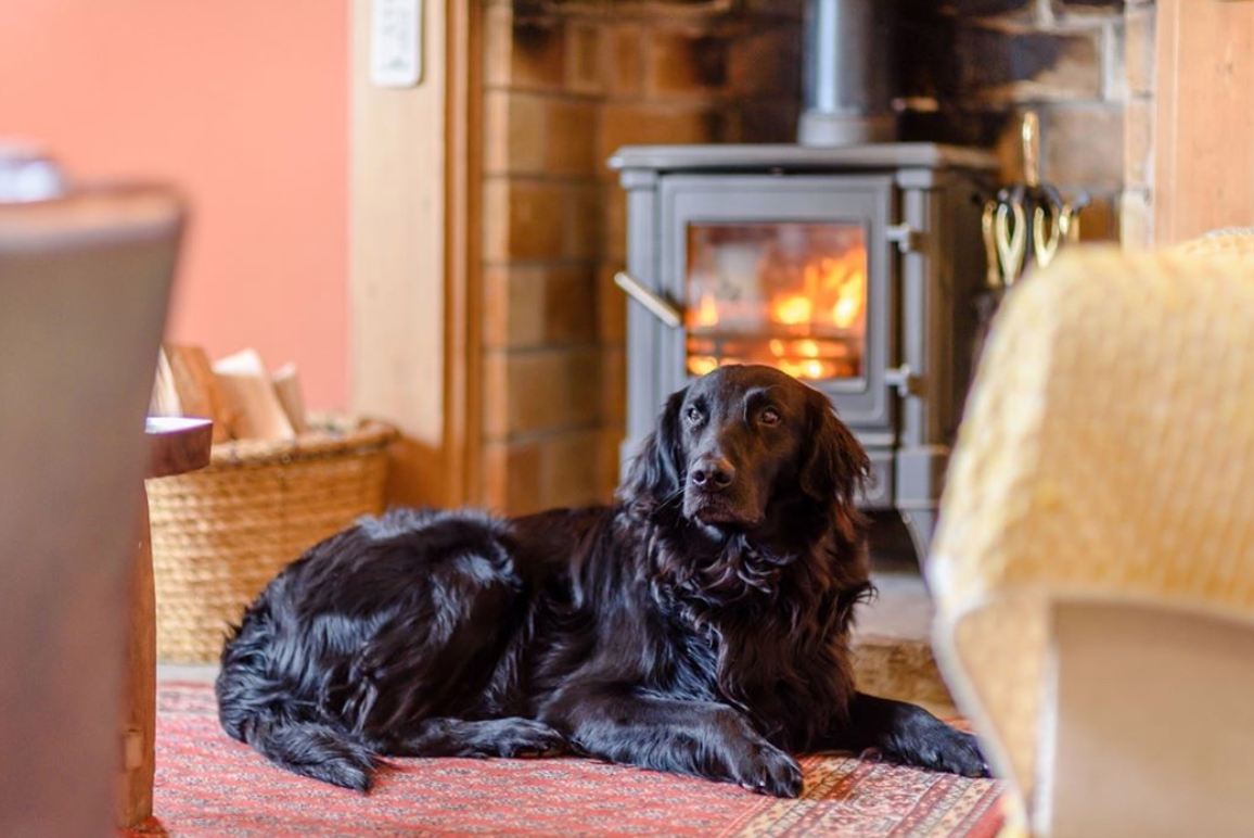 You and your dog can now get a job reviewing luxury holiday cottages, The Manc