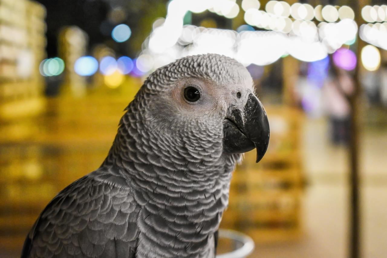 Five parrots removed from wildlife park for constantly swearing at visitors, The Manc