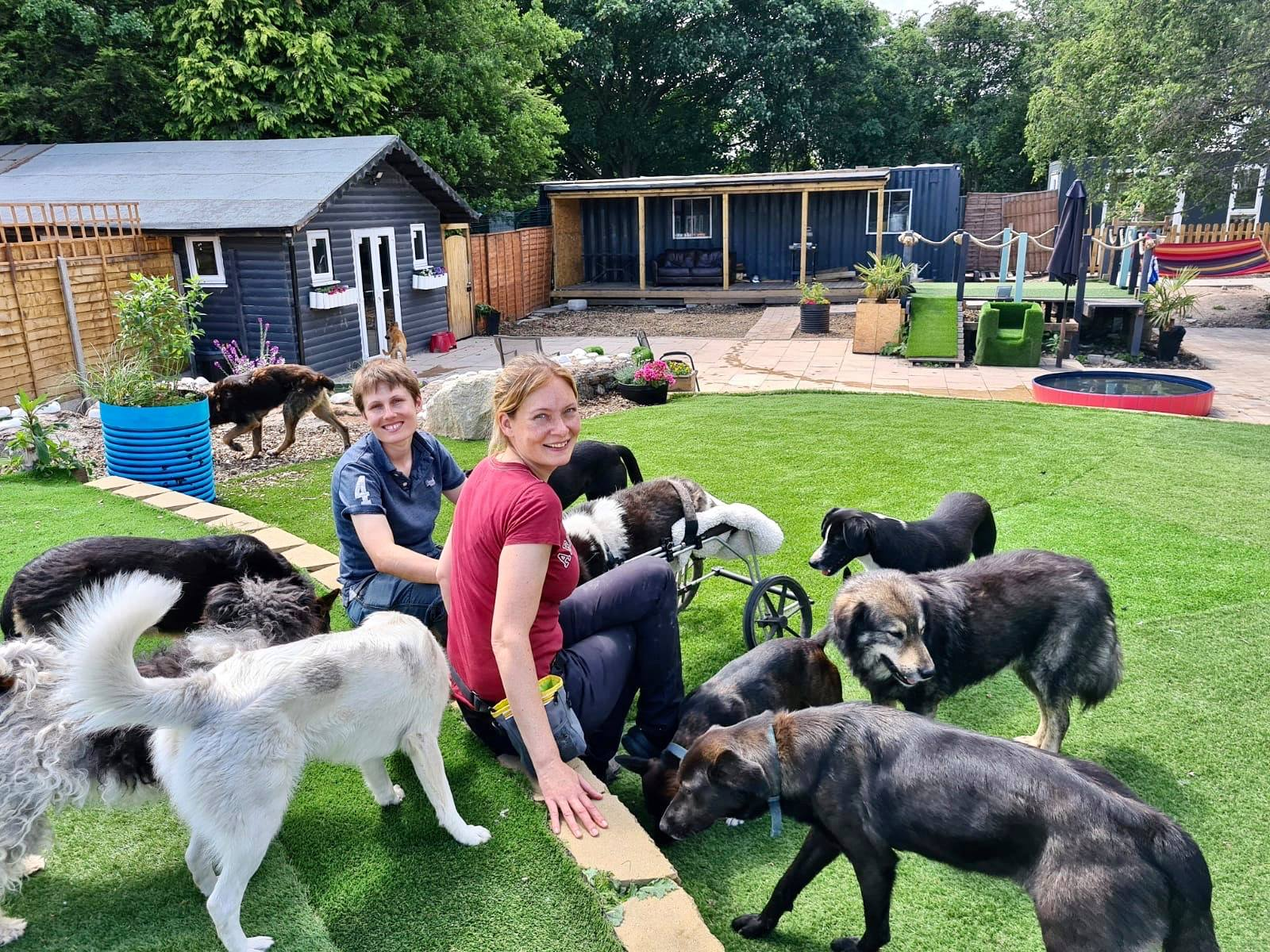 Dogs4Rescue needs your help to build new home for unwanted pooches, The Manc