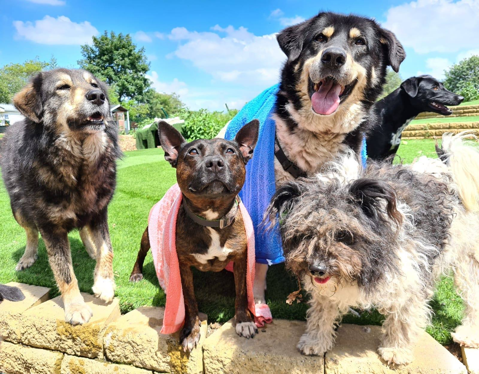 Dogs 4 Rescue secures 46-acre farm to build a rehab sanctuary for the dogs 'no one wants', The Manc