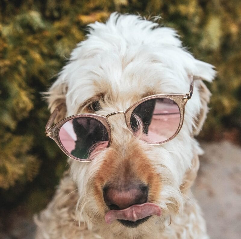 This Manchester eyewear company is launching a range of sunglasses for dogs, The Manc
