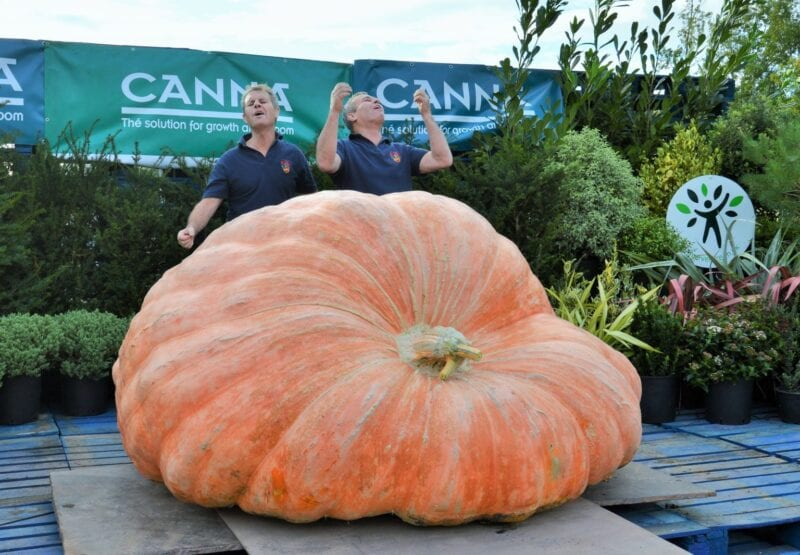 Twin brothers have smashed records by growing the biggest pumpkin in the UK, The Manc