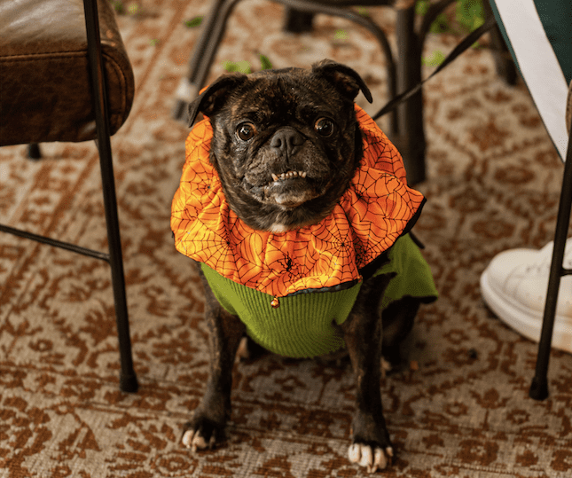 Popular alternative 'Howl'oween' party for dogs returning to Hatch this month, The Manc
