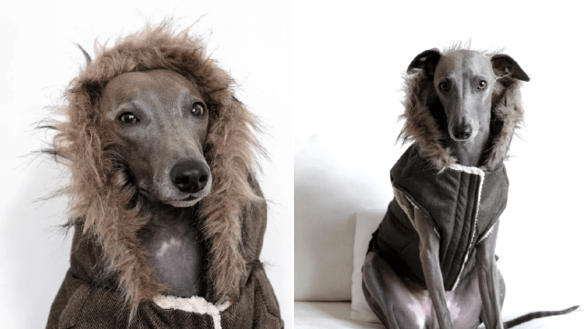 You can now buy your dog a hooded Parka coat from Aldi, The Manc