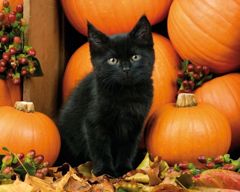 These are some of the cutest costumes for your pet this Halloween, The Manc