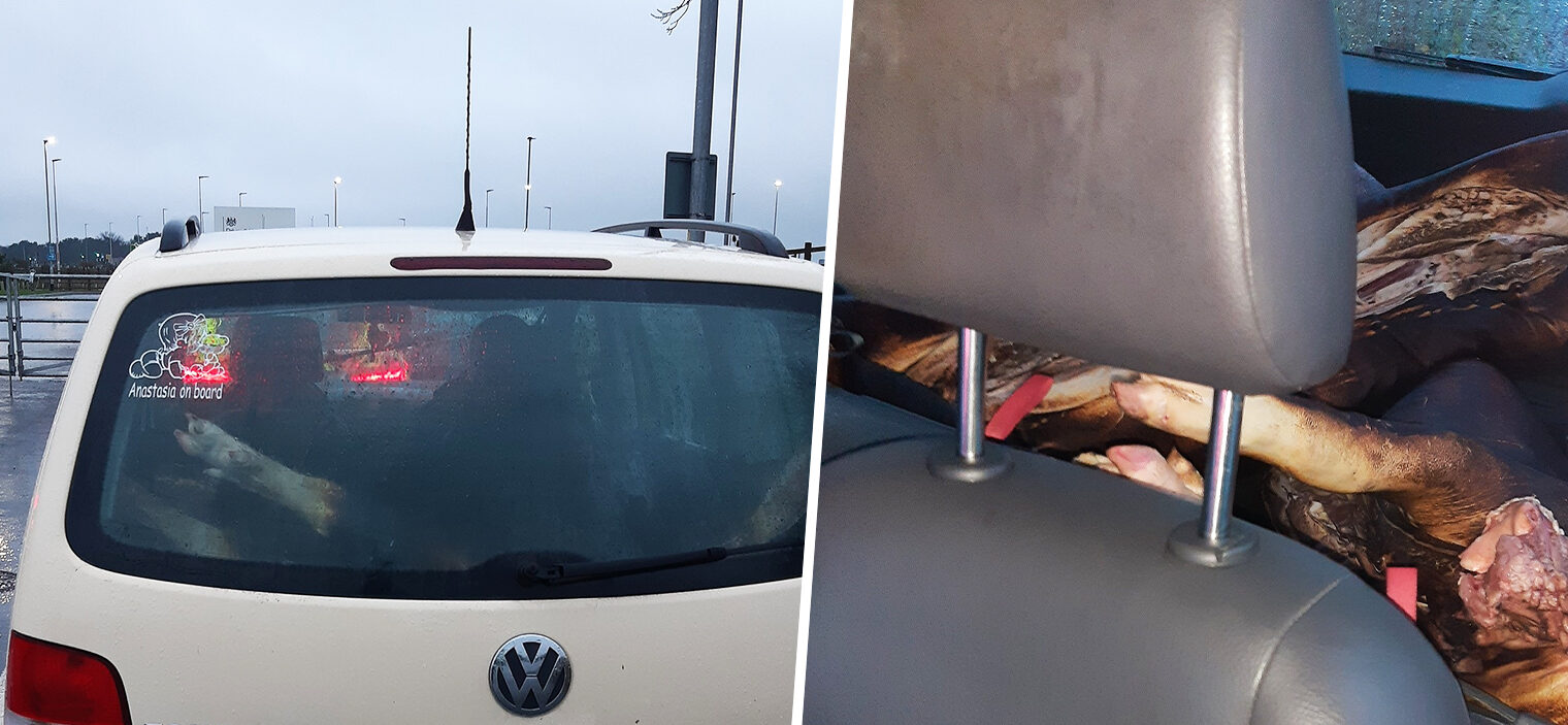 Police stop car on M62 after spotting a dead pig's leg in the back window, The Manc