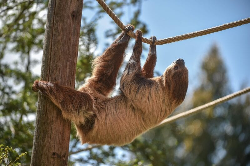 Chester Zoo's 'virtual zoo days' are returning with sloths and bears this Friday, The Manc