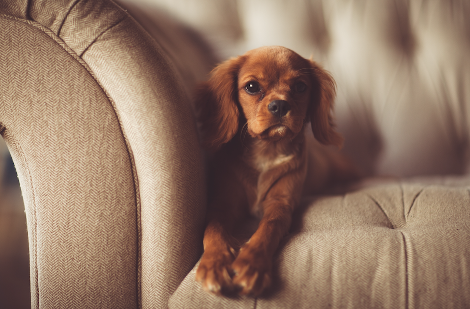Landlords in Manchester can no longer issue blanket bans on tenants having pets, The Manc