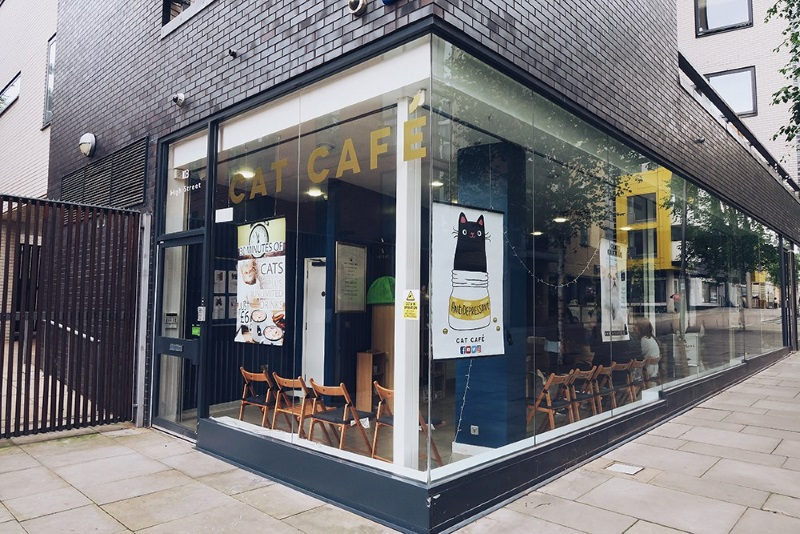 A fundraiser has been set up to save Cat Cafe Manchester from permanent closure, The Manc