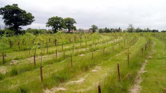 More than a million new trees are being planted across the North West, The Manc