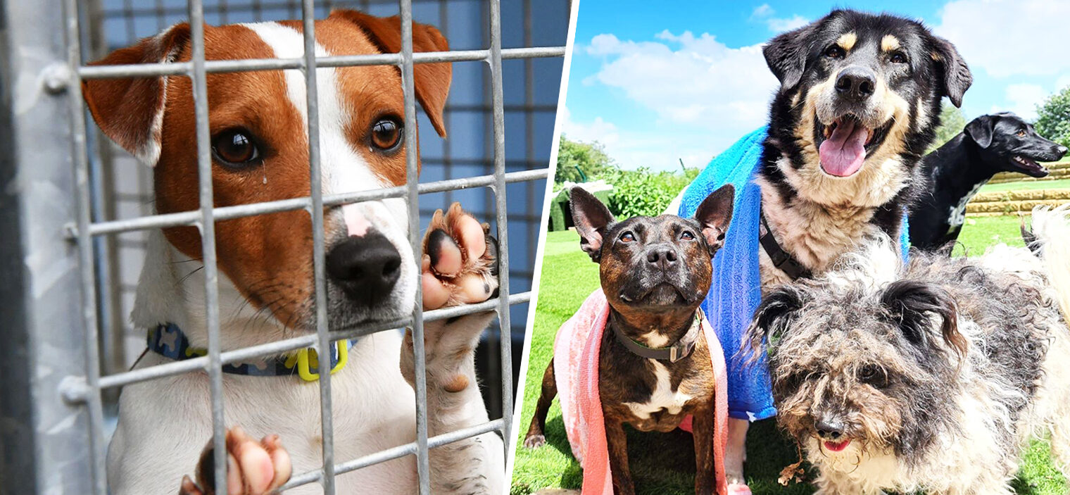 The current situation in Greater Manchester as experts warn of a 'major dog welfare crisis', The Manc