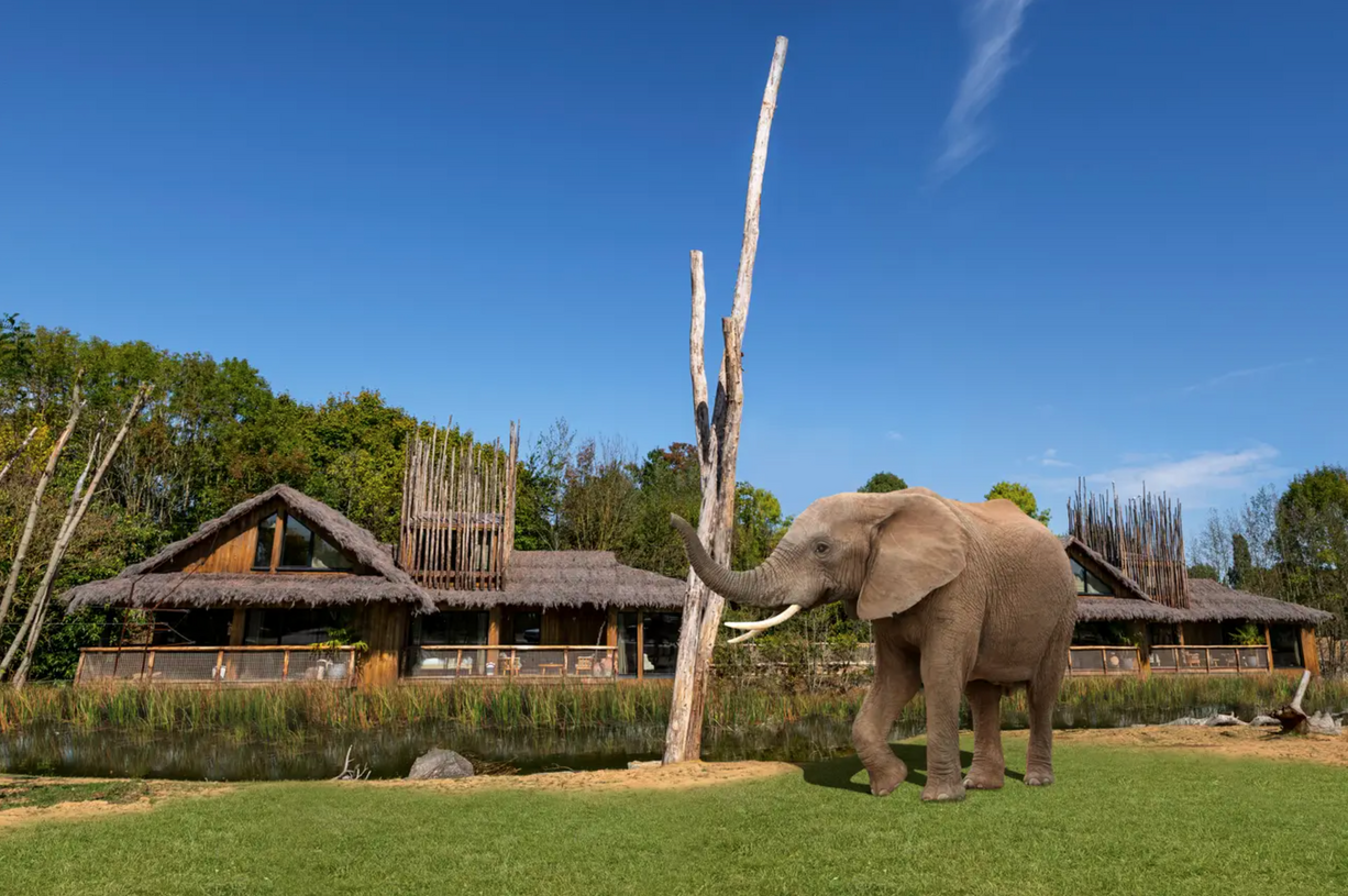 Much-anticipated luxury lodges set to open at UK safari park in April, The Manc