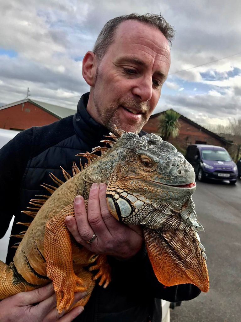 This miracle iguana has baffled vets and shocked his owners by coming 'back from the dead', The Manc