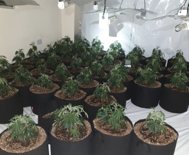 £150k cannabis farm discovered in Wythenshawe, The Manc