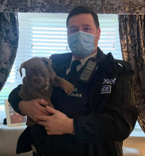 Bulldog puppies reunited with owners after being snatched from Wigan home by burglars, The Manc