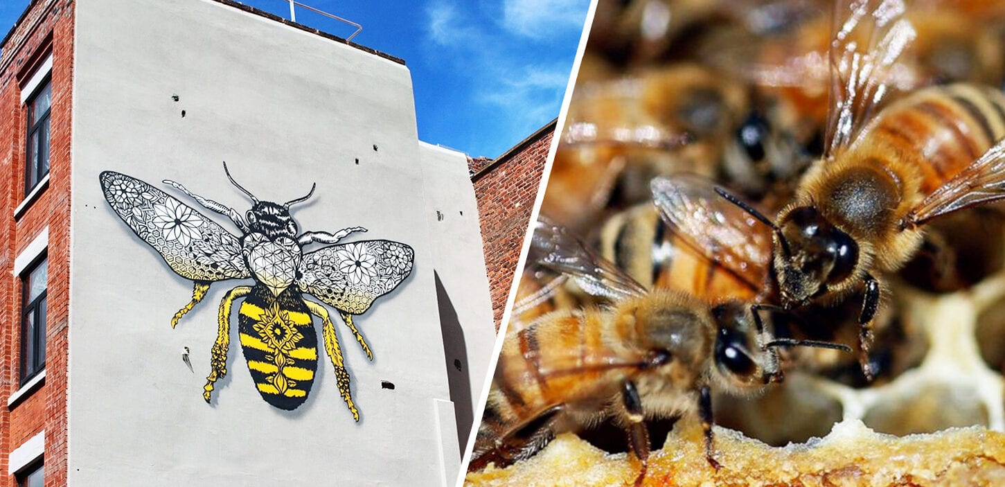 The UK government has approved bee-killing pesticides – but Mancunians can help reverse this, The Manc