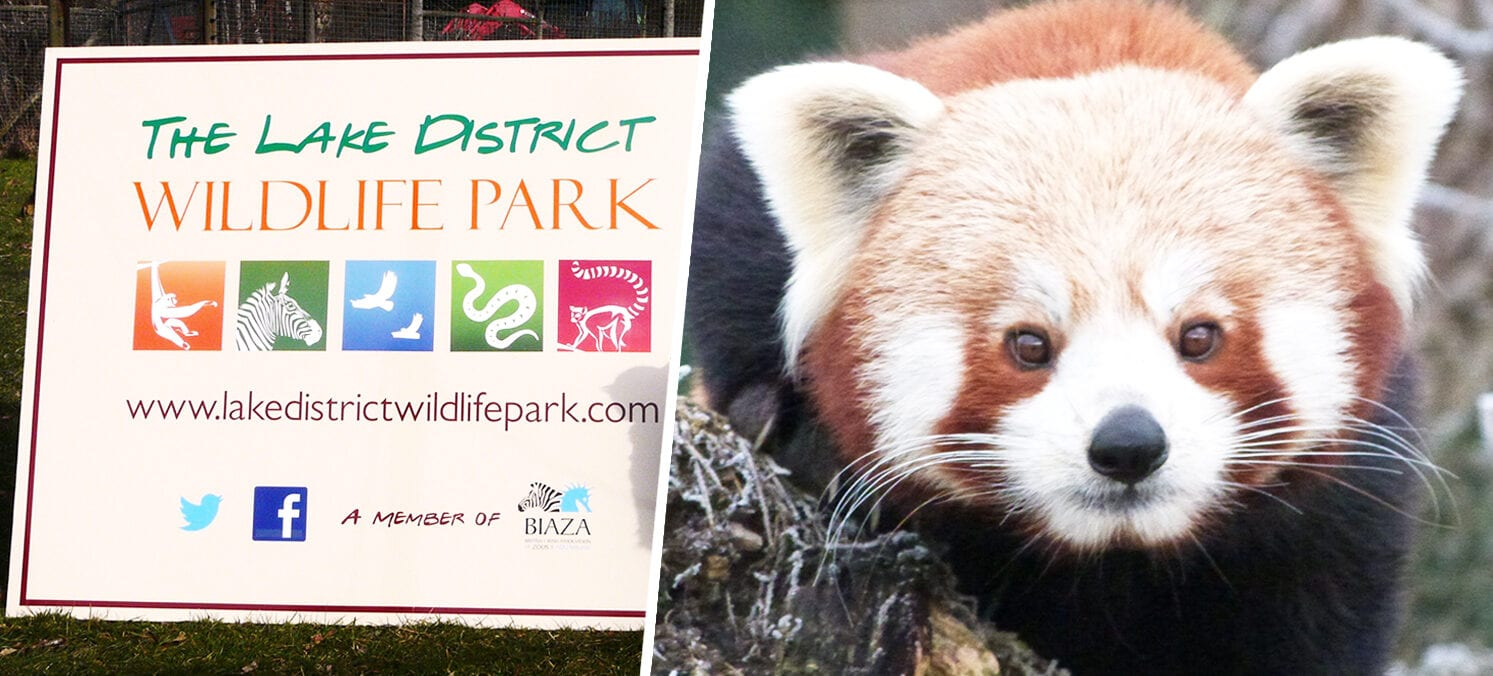 A Lake District wildlife park left 'fighting for survival' pleads for public support, The Manc