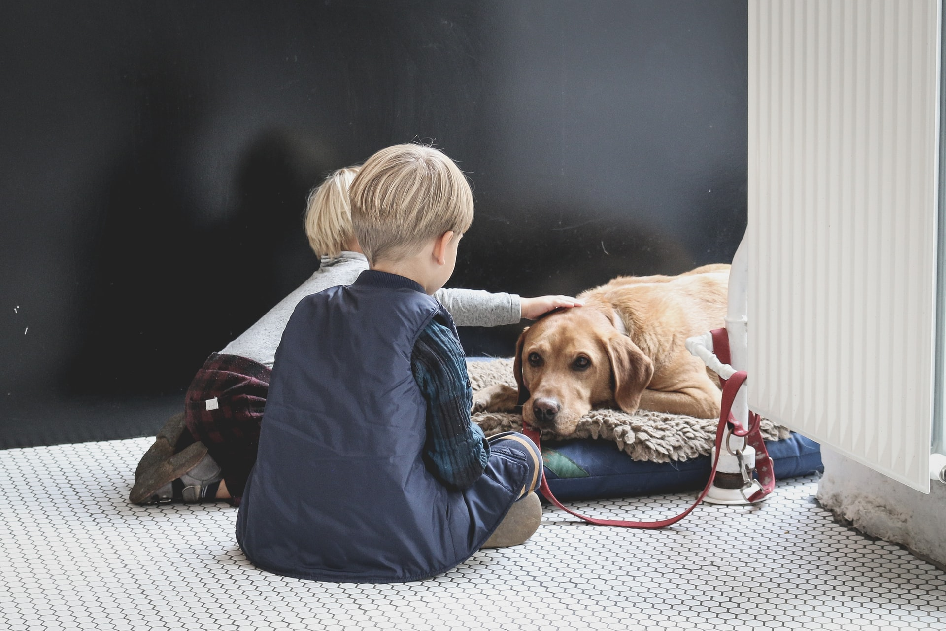 Best dog breeds for people with children, The Manc