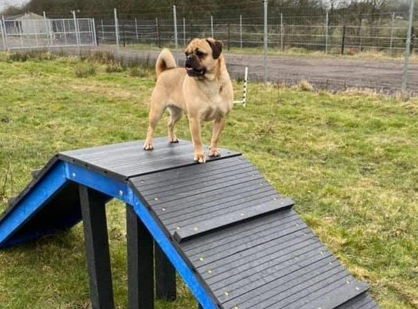 There's a new 'secure dog park' just half an hour from Manchester, The Manc