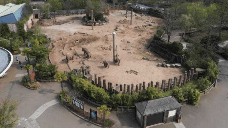 Chester Zoo unveils 'Conservation Masterplan' to prevent wildlife extinction, The Manc