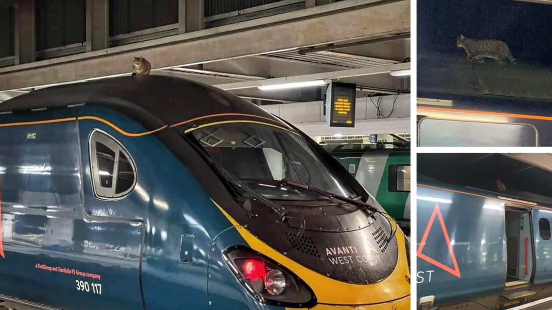 London cat attempts to hitch ride to Manchester on top of Pendolino train, The Manc