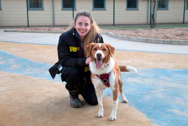 Dogs Trust Manchester is looking to find a 'forever home' for its longest-term resident hopes as lockdown lifts, The Manc