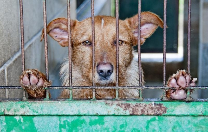 The maximum prison sentence for animal cruelty has now been raised to five years, The Manc