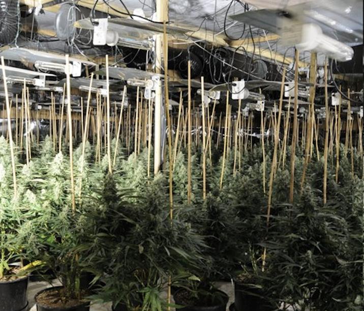 Cannabis farm worth half-a-million found in abandoned Droylsden building, The Manc